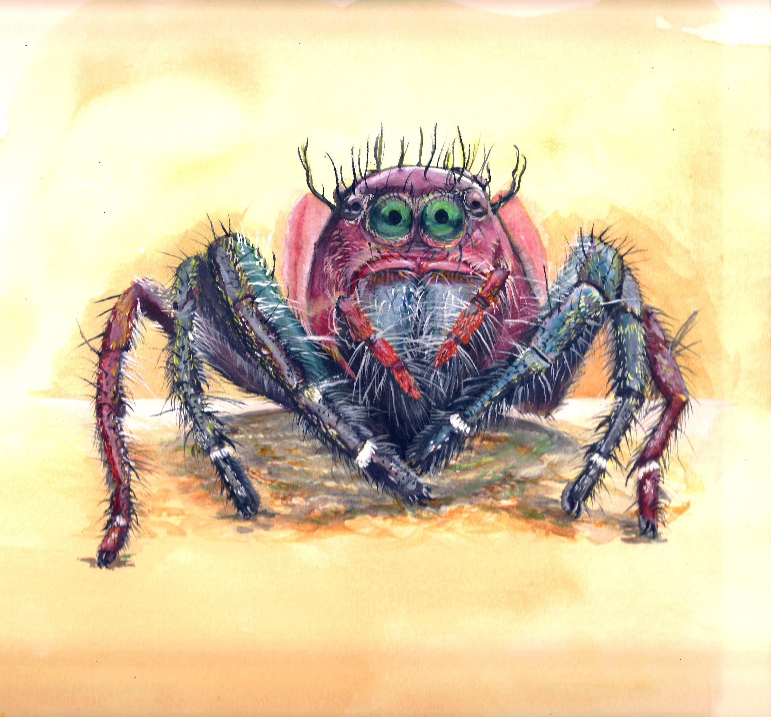 Jumping spider 2 — April 8 2014.jpg