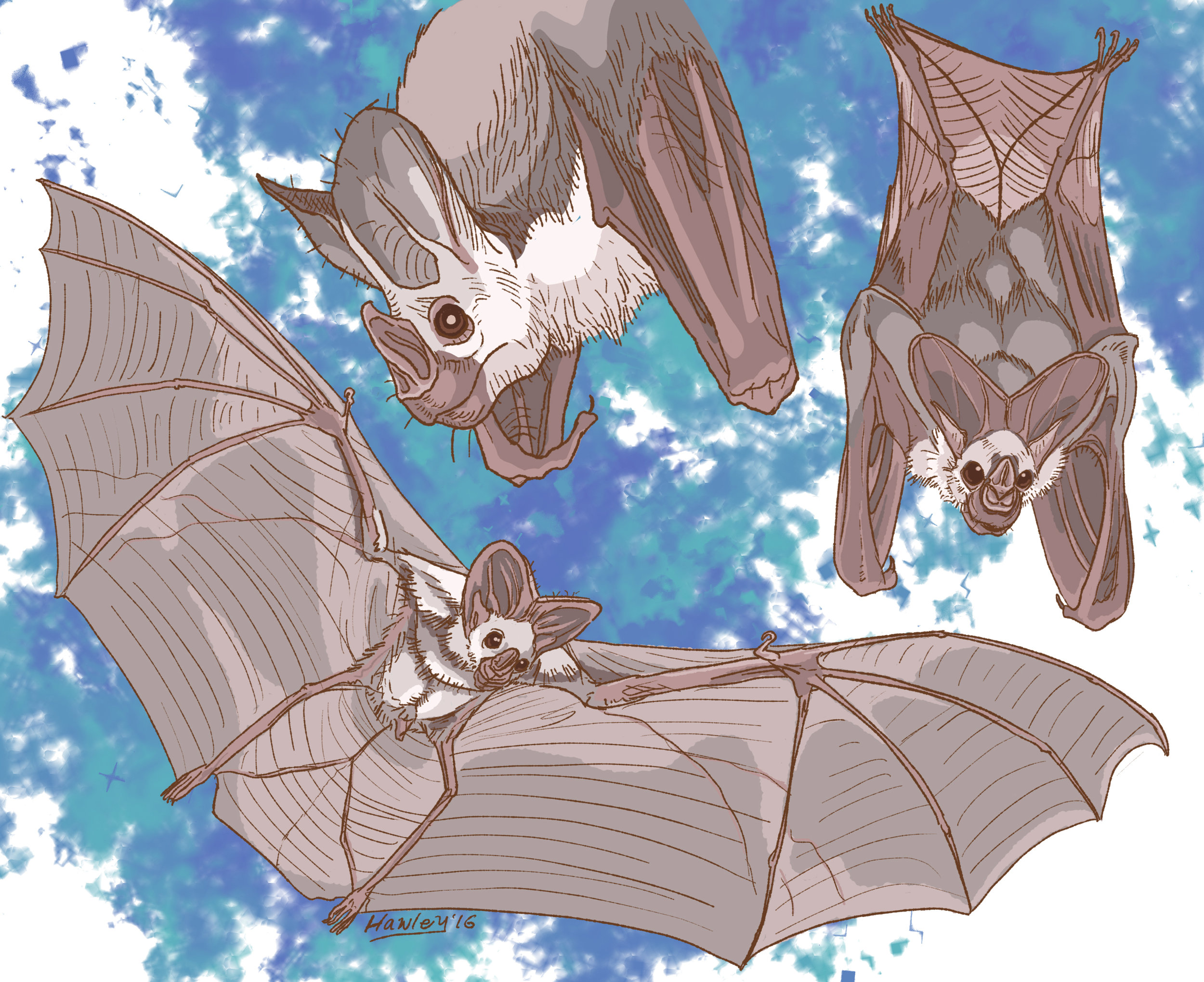 Ghost bat — roosting and taking flight