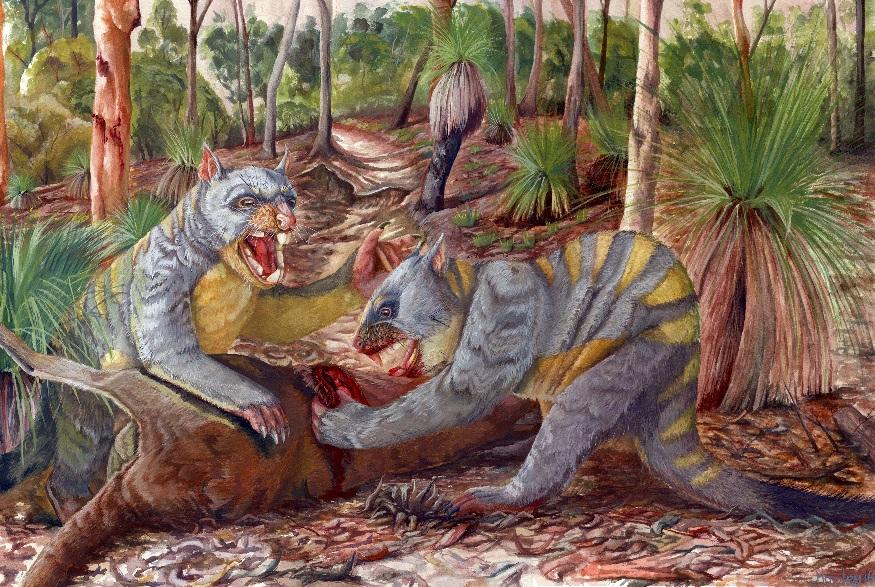Marsupial lions (Thylacoleo carnifex)