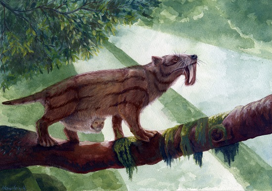 My interpretation of the marsupial sabretooth. Copyright Jesse Hawley.