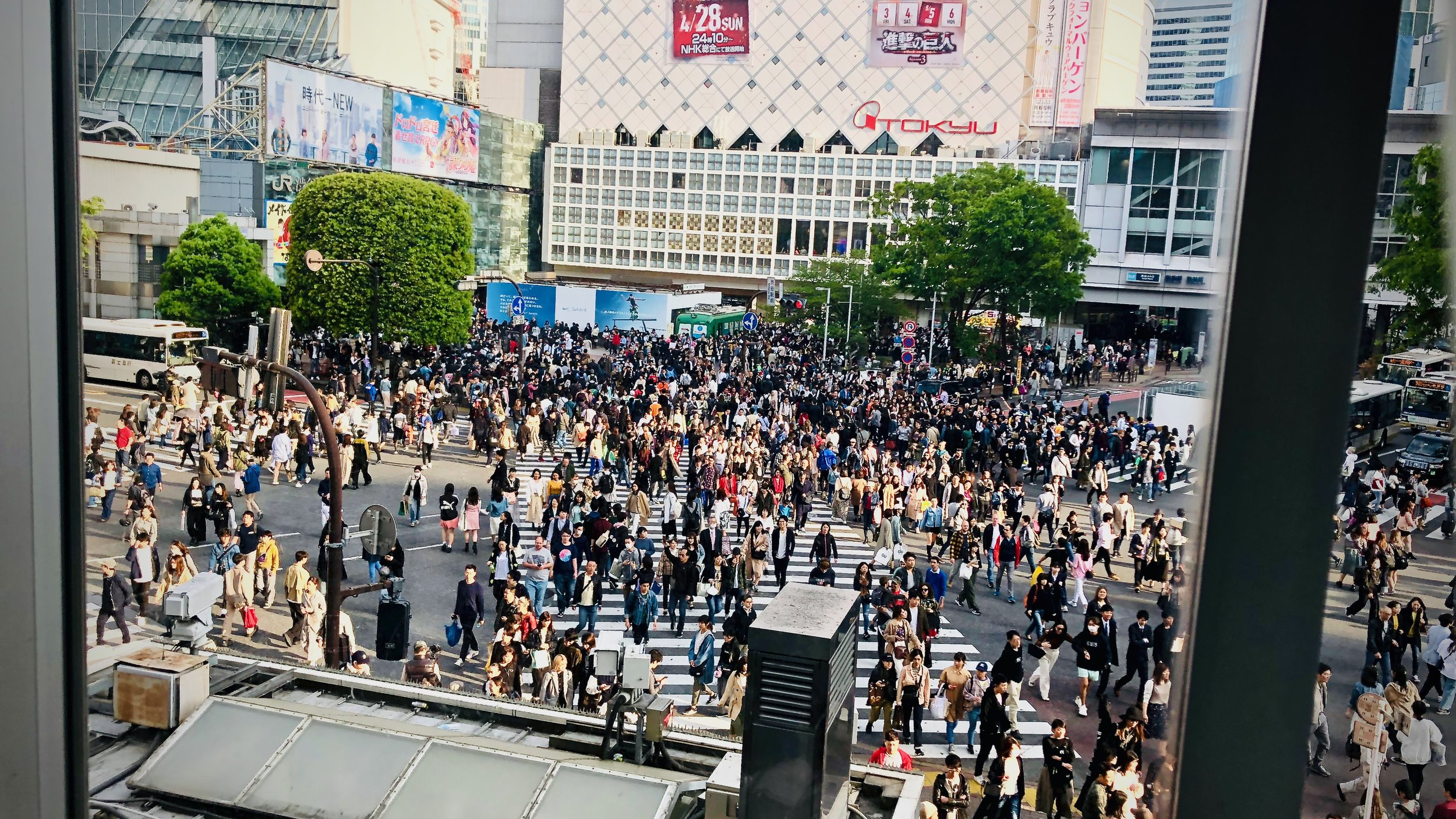View of Shibuya Crossing from Starbucks.