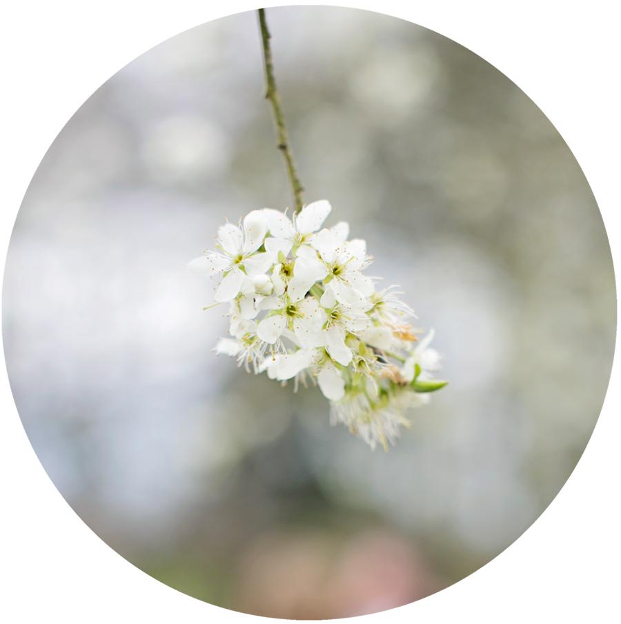 blossom_lifestyle_photographer