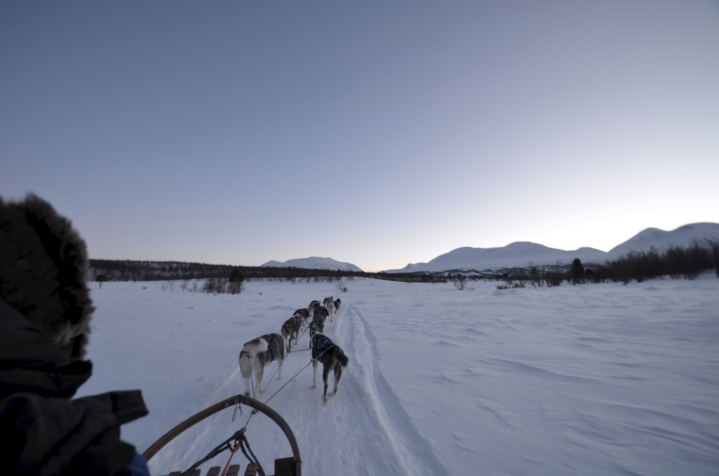 A dog team pulls his musher