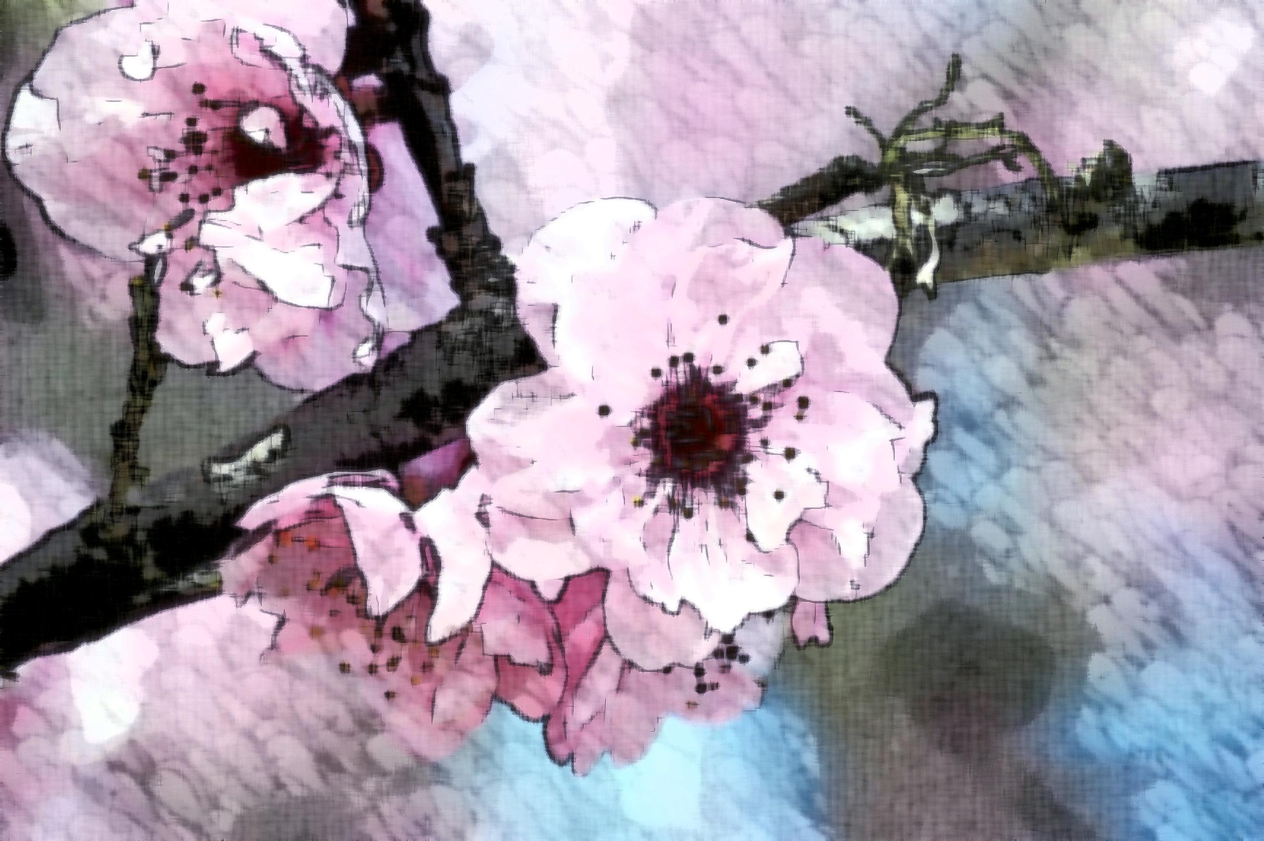 Bloom.jpg