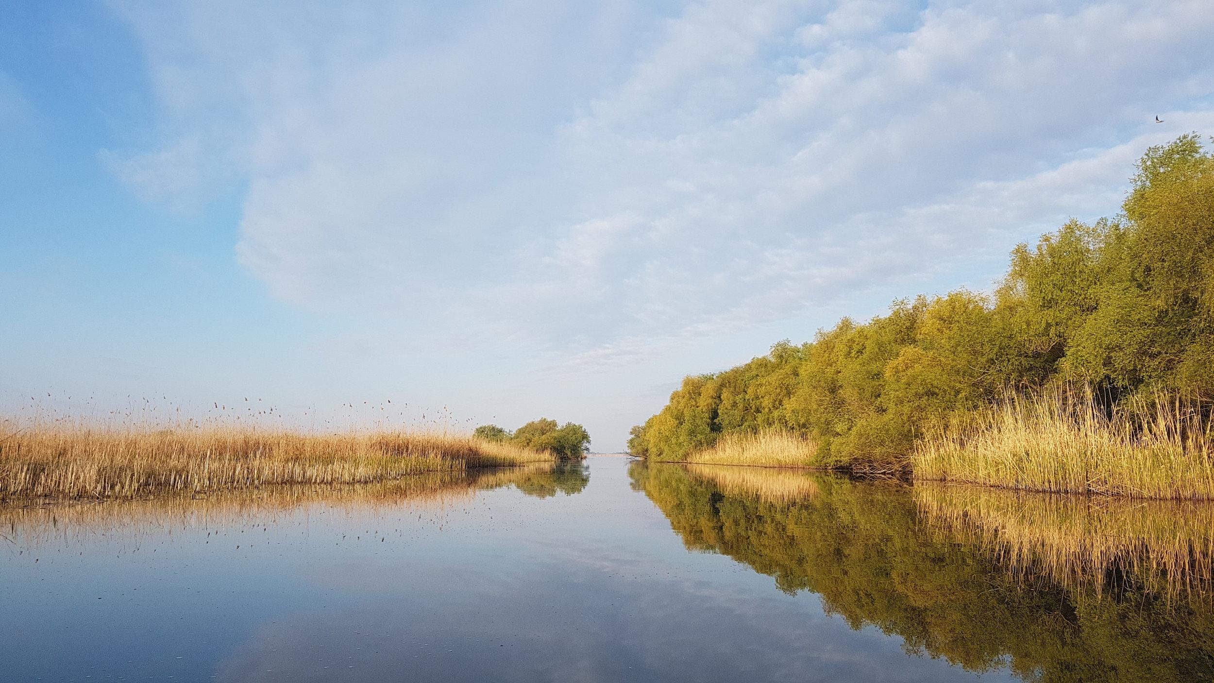 Morning in the Danube Delta