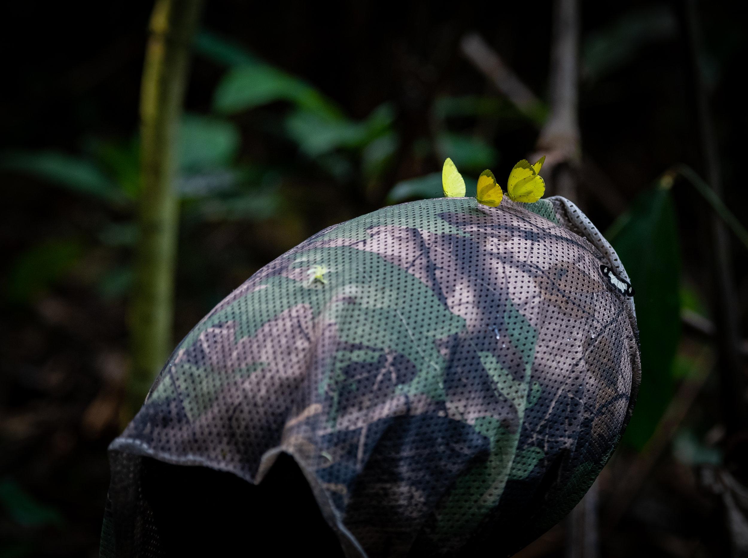 Field recording in the Congo rainforest