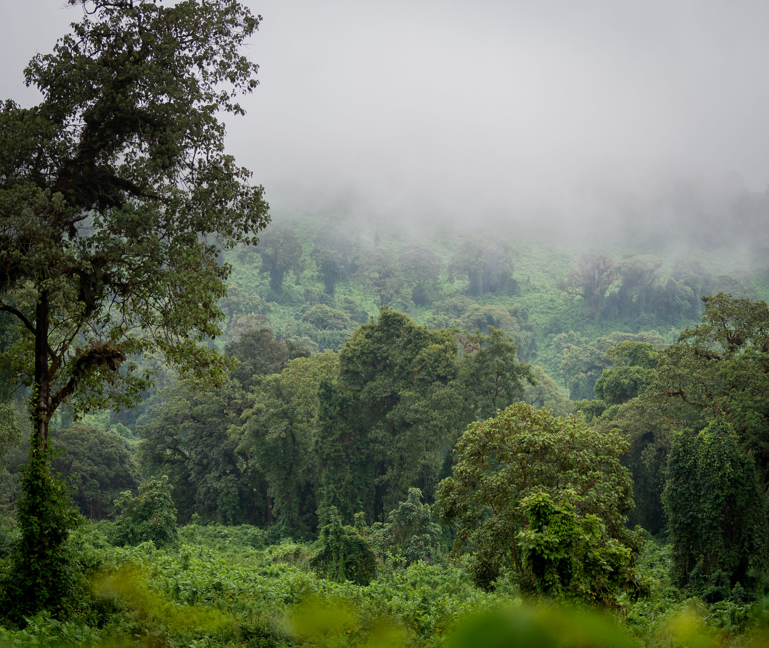 Harenna Forest in the clouds