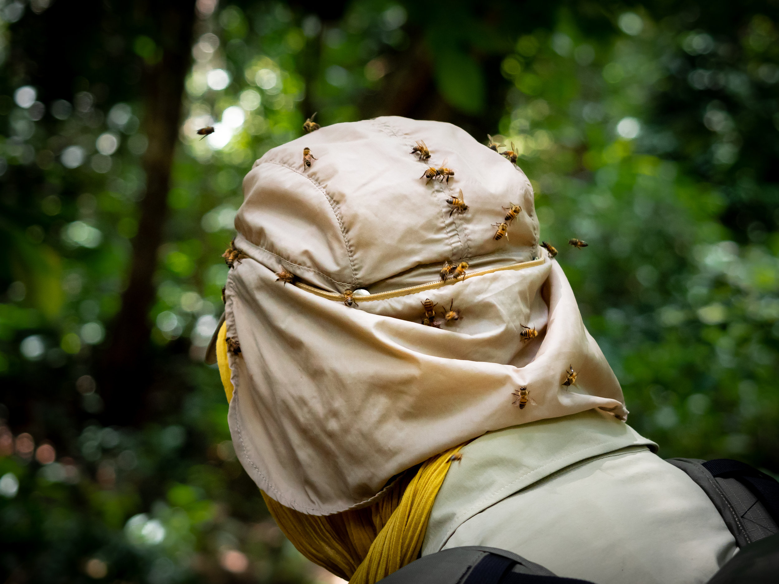 Bees swarming on Stijn in the Congo rainforest