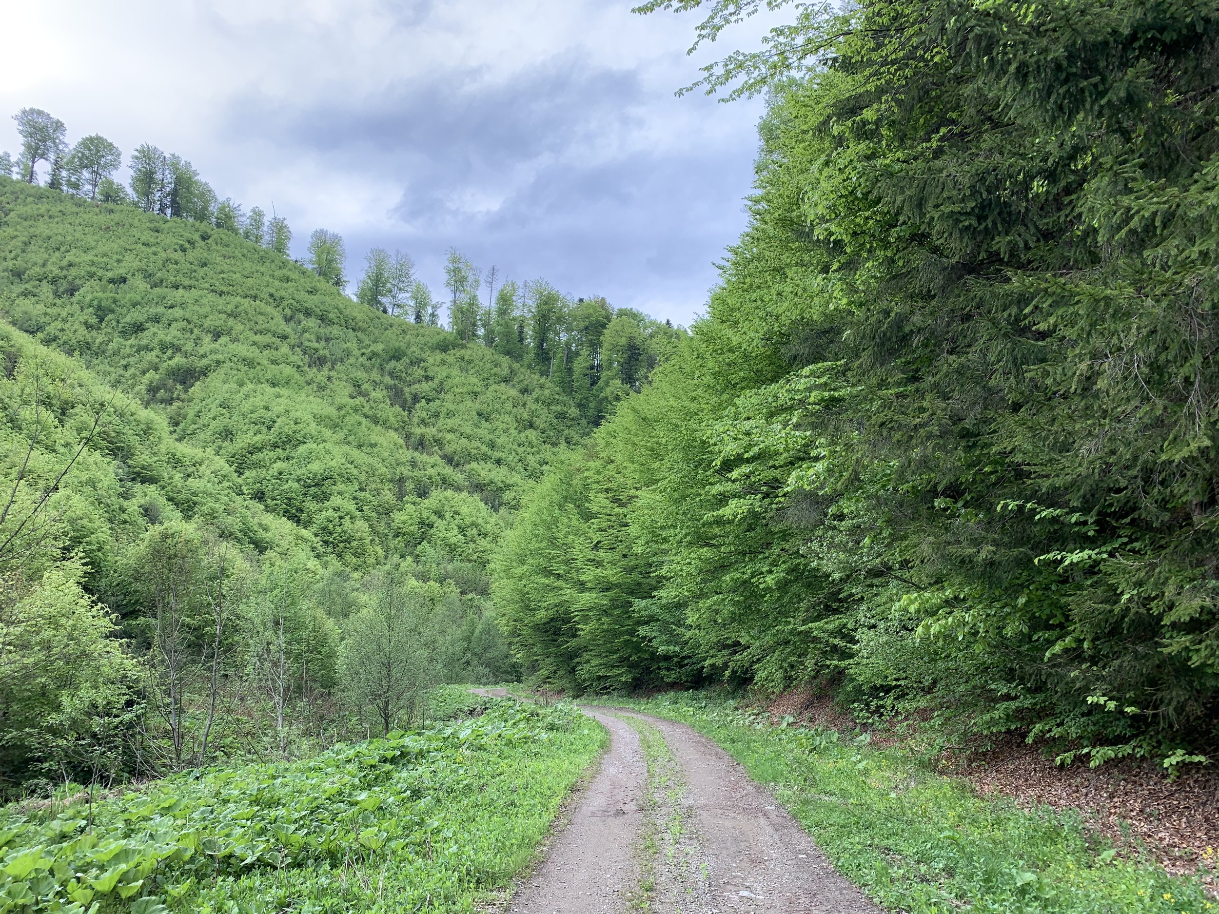 Picturesque hiking trail in Transylvania