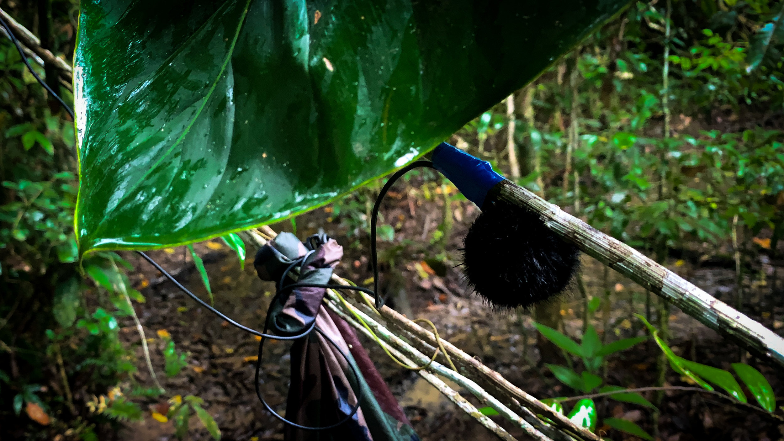 Makeshift umbrella for microphones in the Amazon
