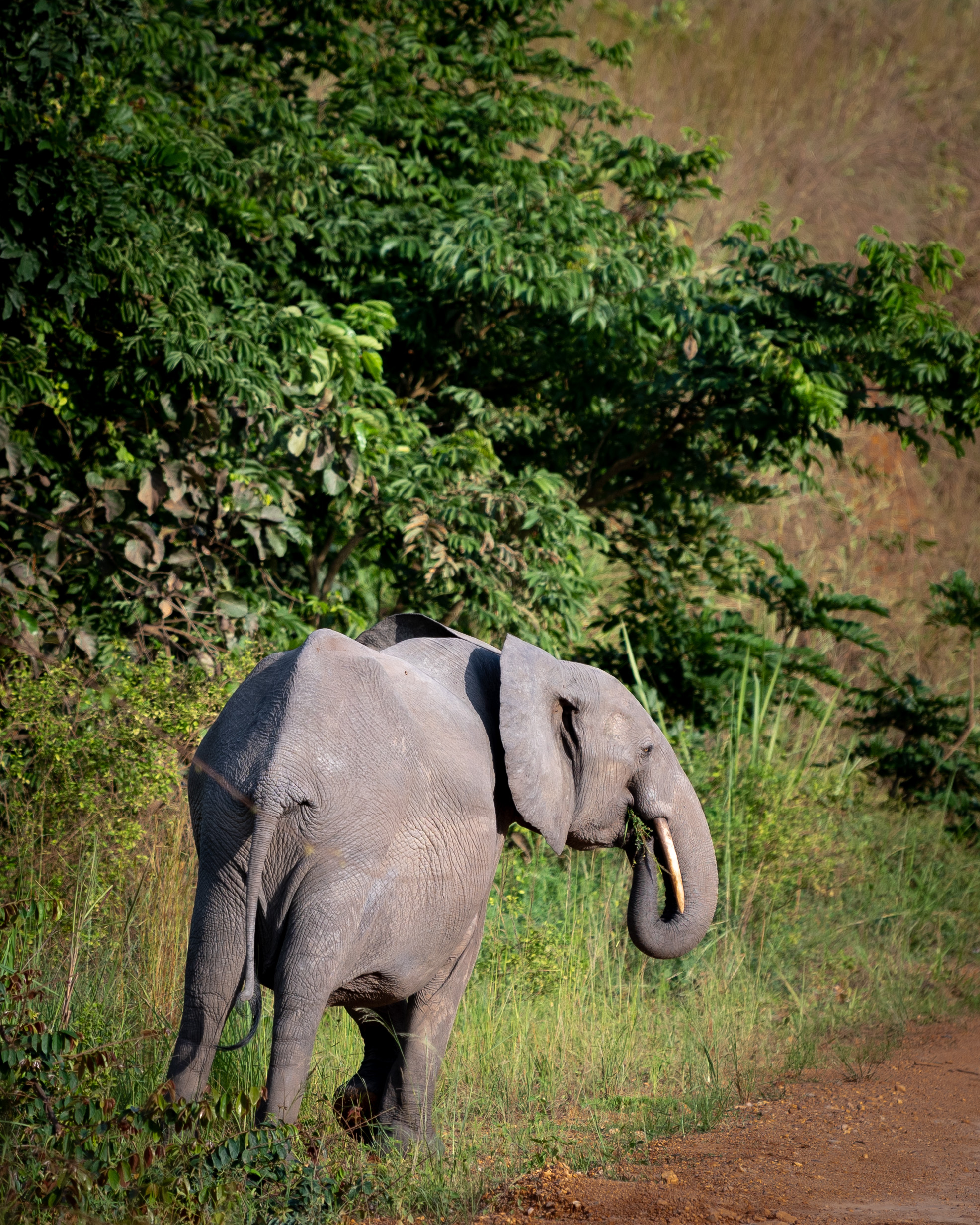 Elephant in Lope National Park