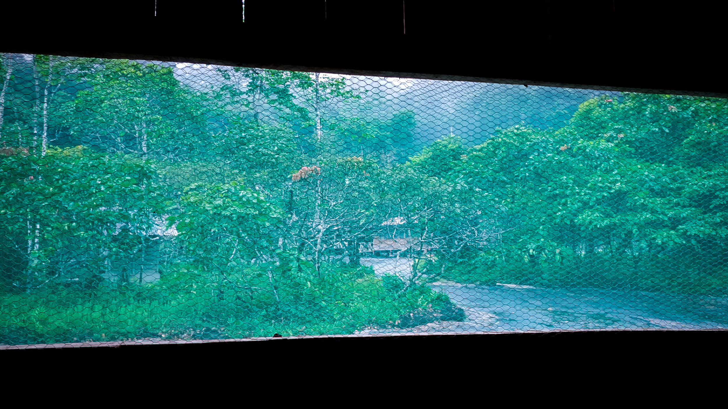 View from my bed in the jungle camp