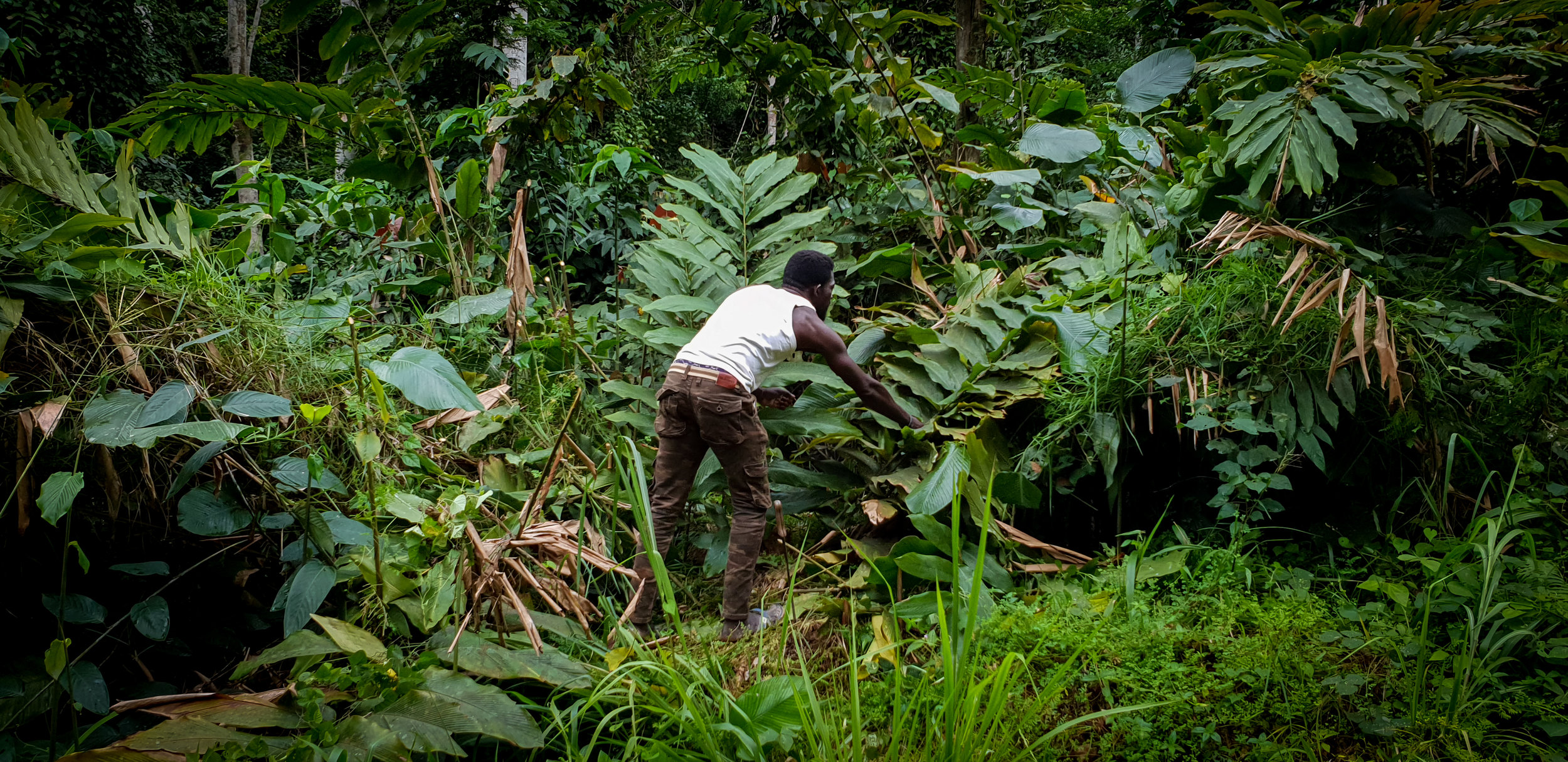 Ghislain clearing a path in the jungle