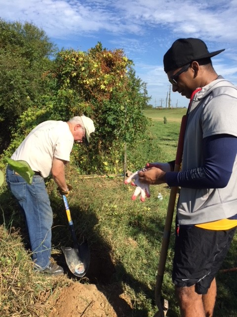 Ed C. and Navin from Federal City's Rotary Club plant a tree
