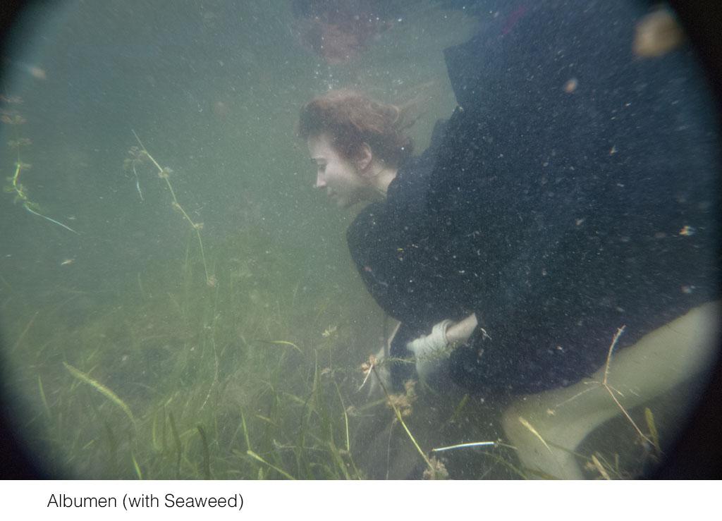 albumen_with_seaweed.jpg