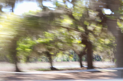 """Road View, St Helena Island, SC,  archival photograph on washi paper, 18"""" x 20"""",  $200"""