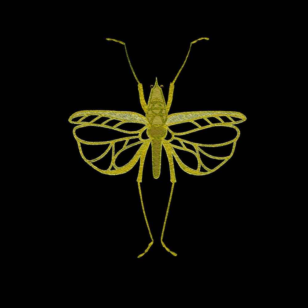 "Gold Grasshopper #1 , gold ink and gouache on black paper, 7"" x 7"", $150"