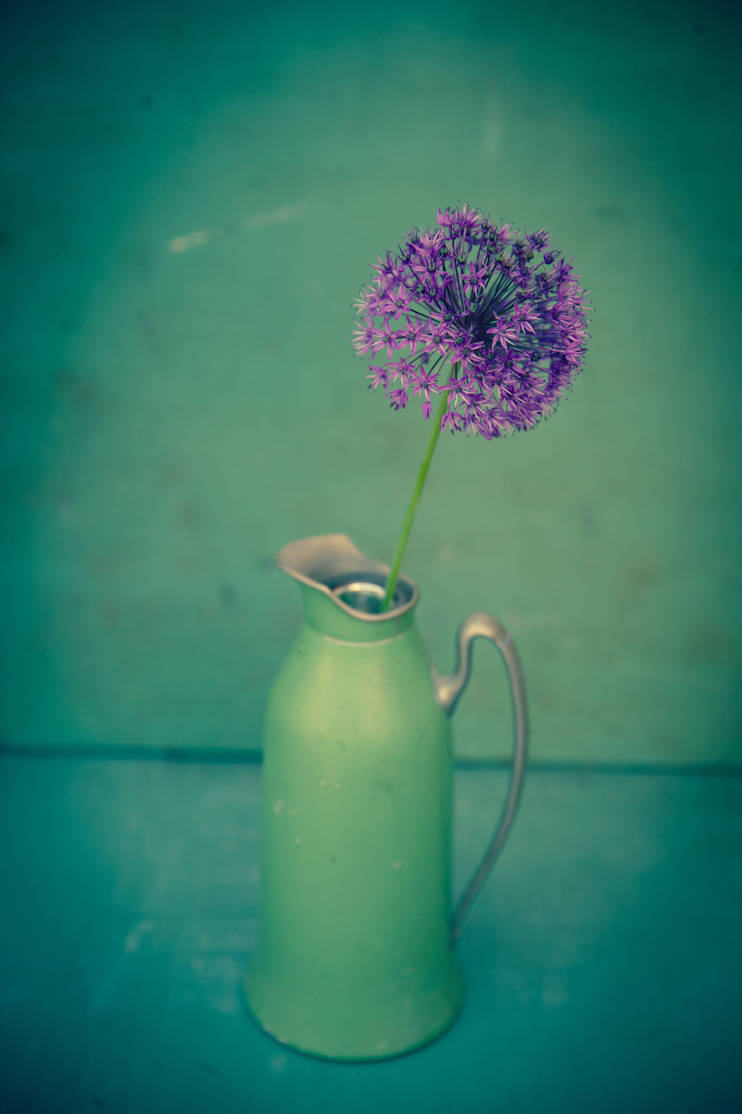"Allium in Green Pitcher , archival inkjet print on paper, 18"" x 12"", $225"