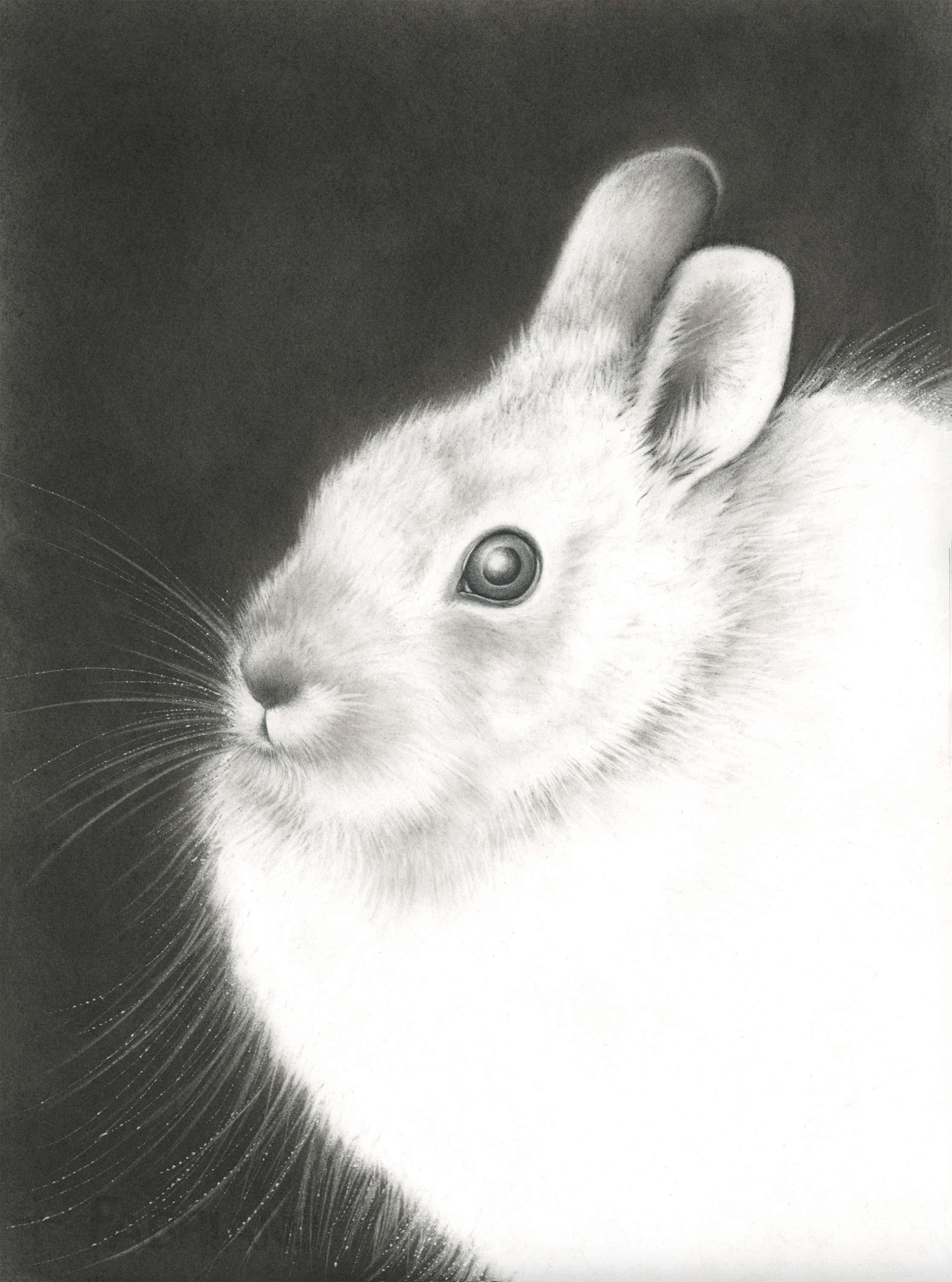 "Jade Rabbit , graphite and charcoal on paper, 17"" x 13"" framed, $850"