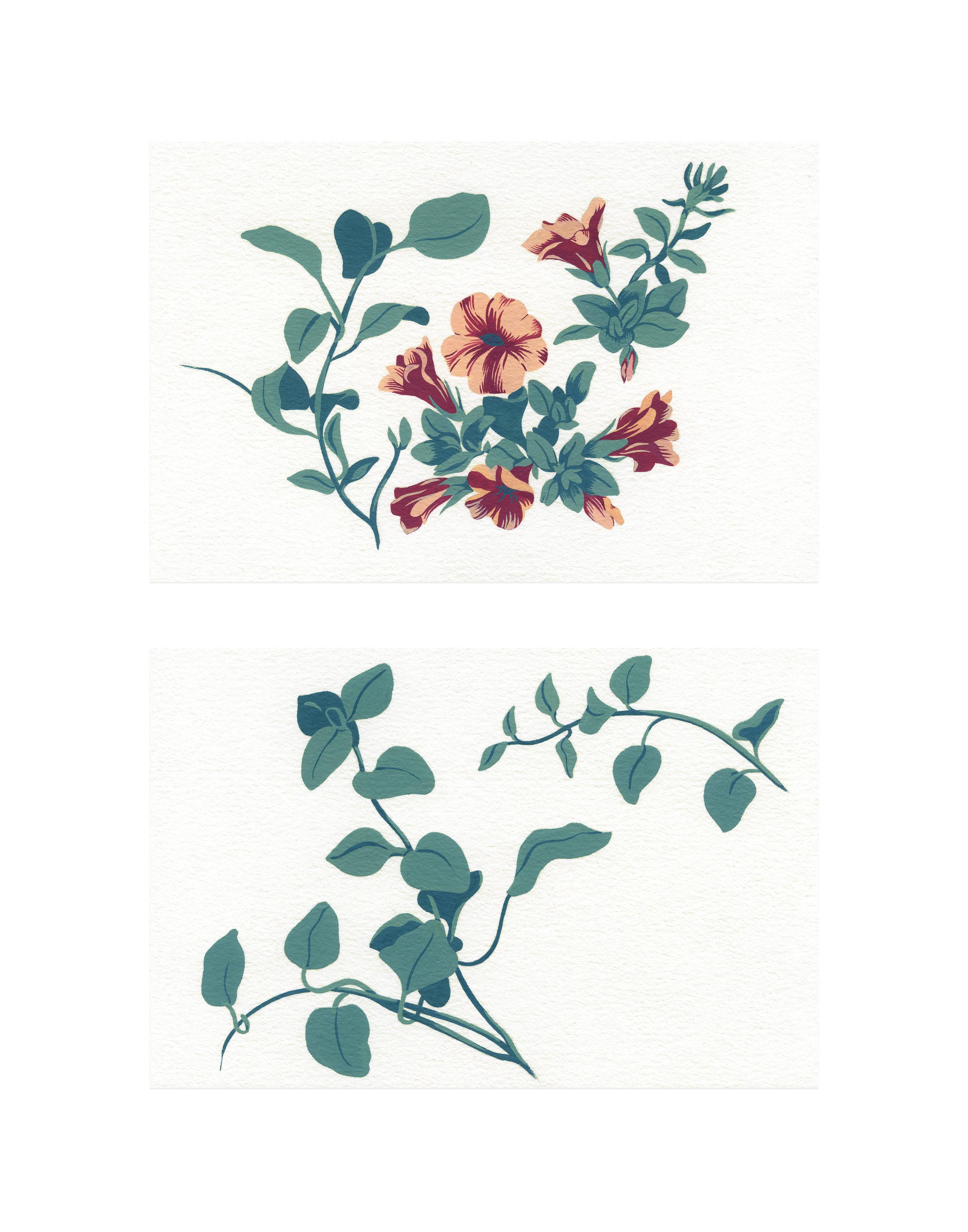 """Vinca Vine and Wave Petunias , gouache on paper, 2 5 1/2"""" x 8 1/2"""", $450"""