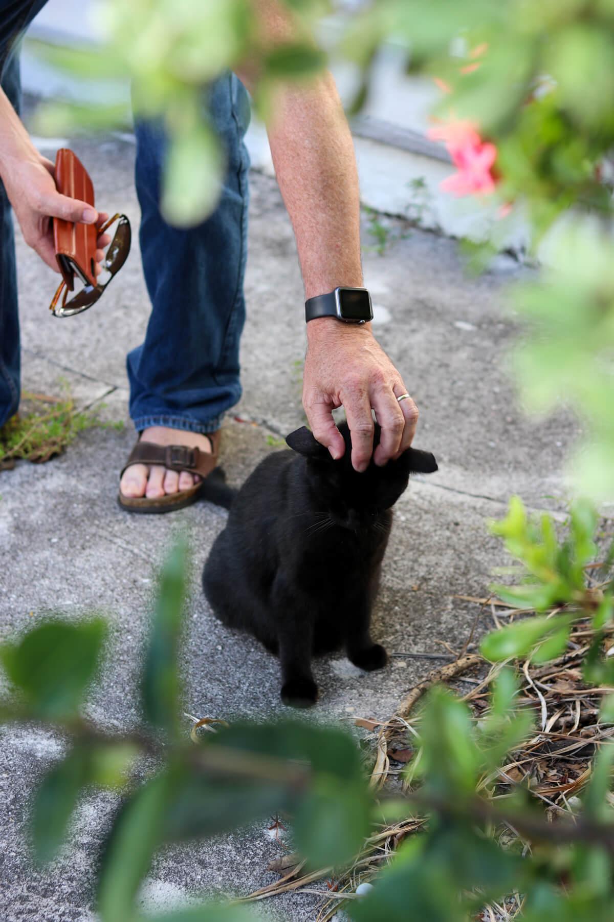A Street Cat Named Bonnie -
