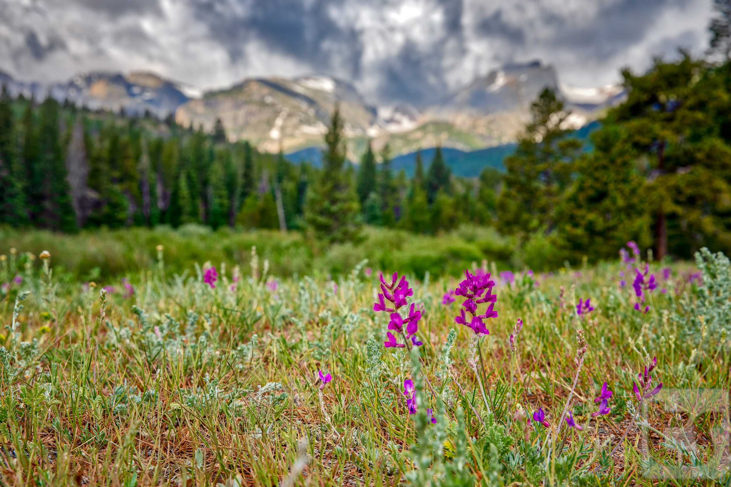 Rocky Mountain Summer 1