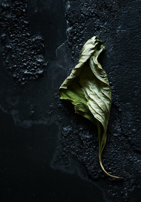 Dried Leaf.jpg
