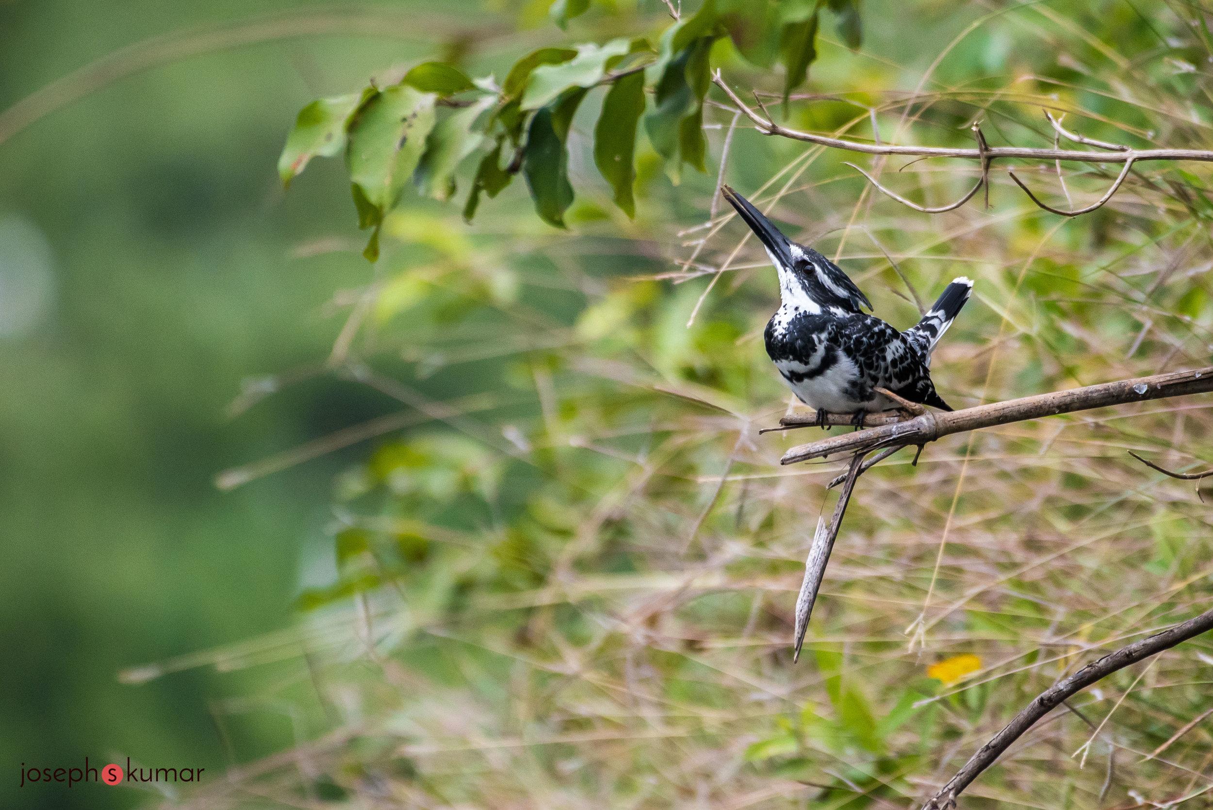Ranganathittu44.jpg