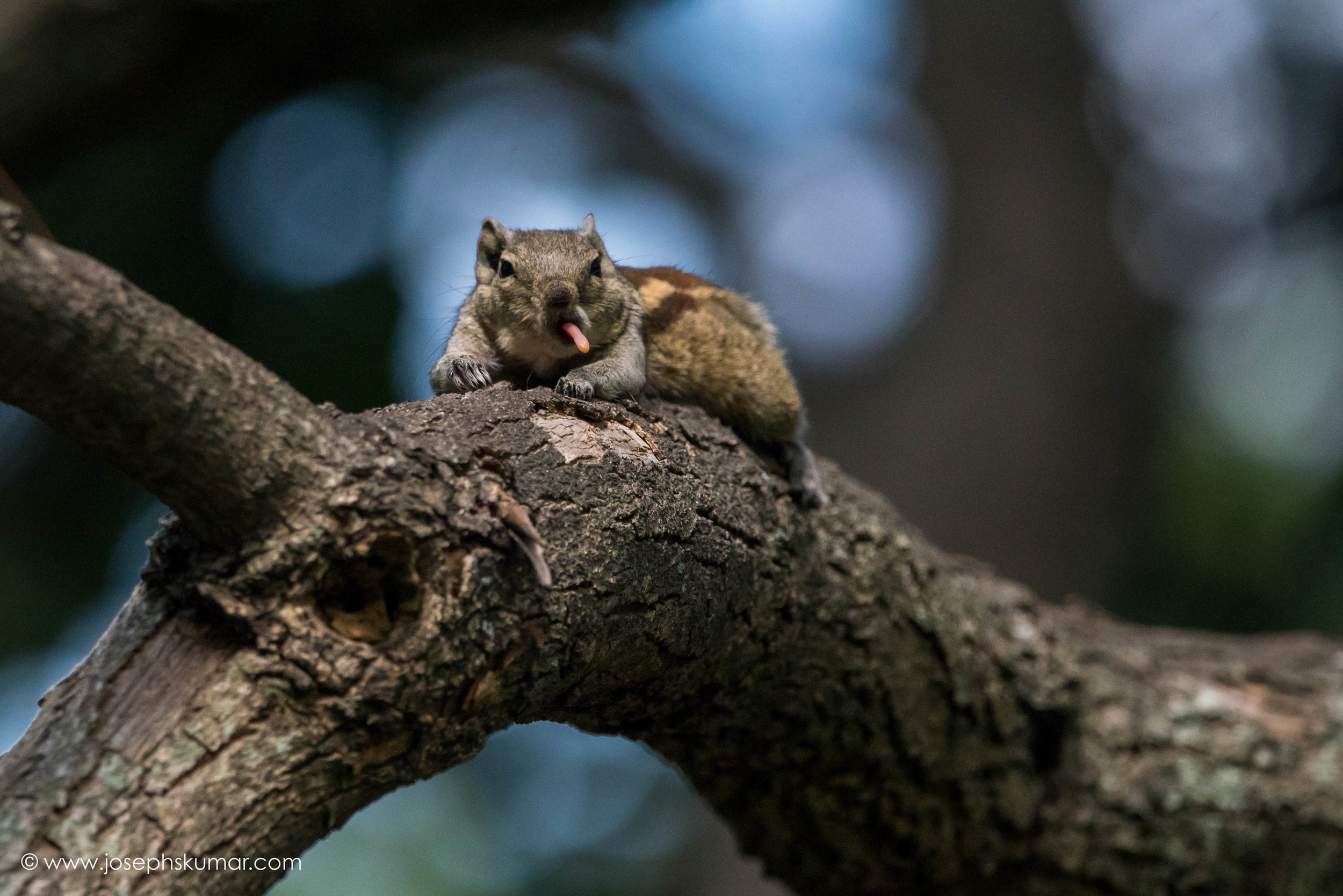 The Cheeky Squirrel