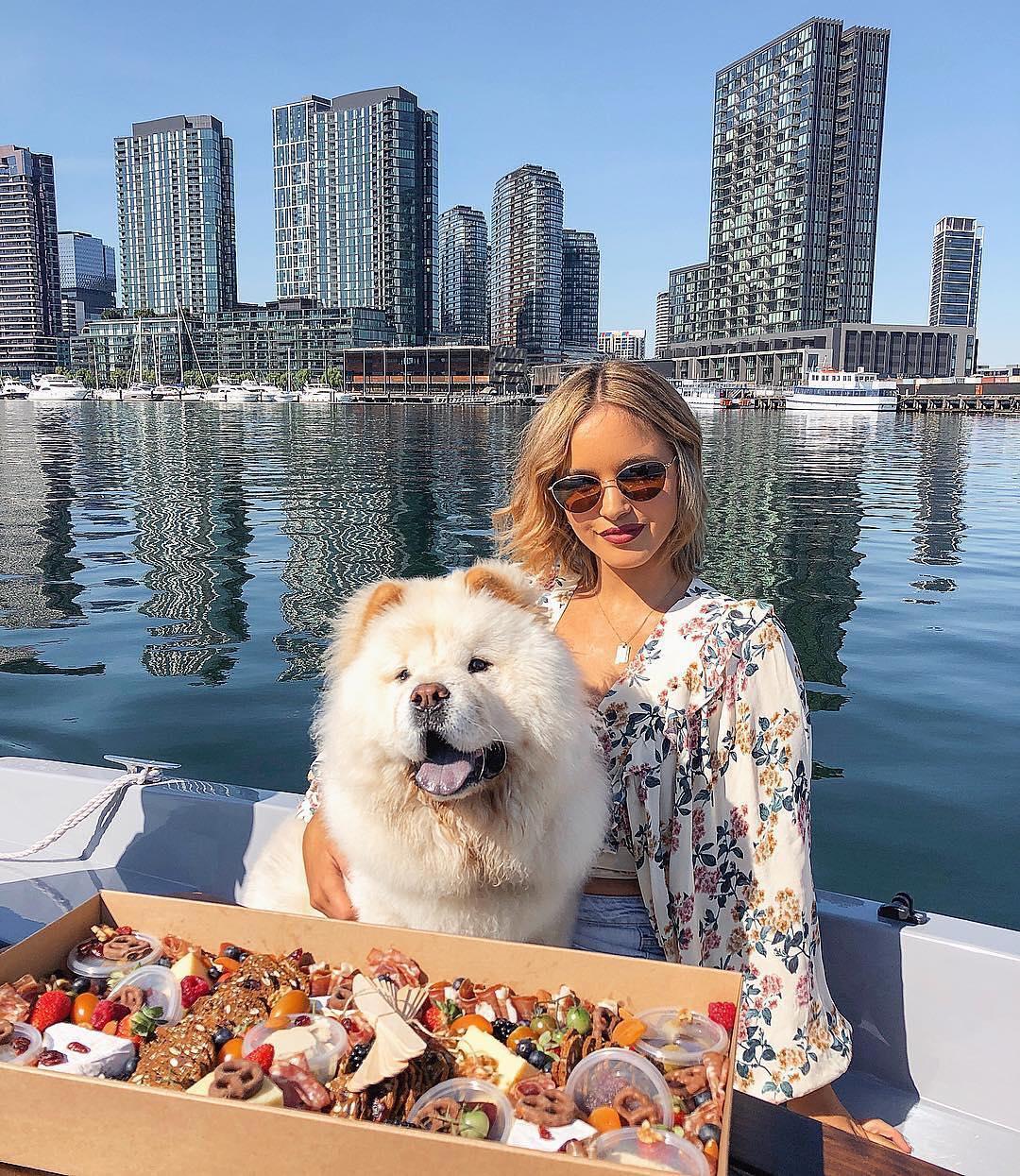 goboat-dog-friendly-melbourne.jpg