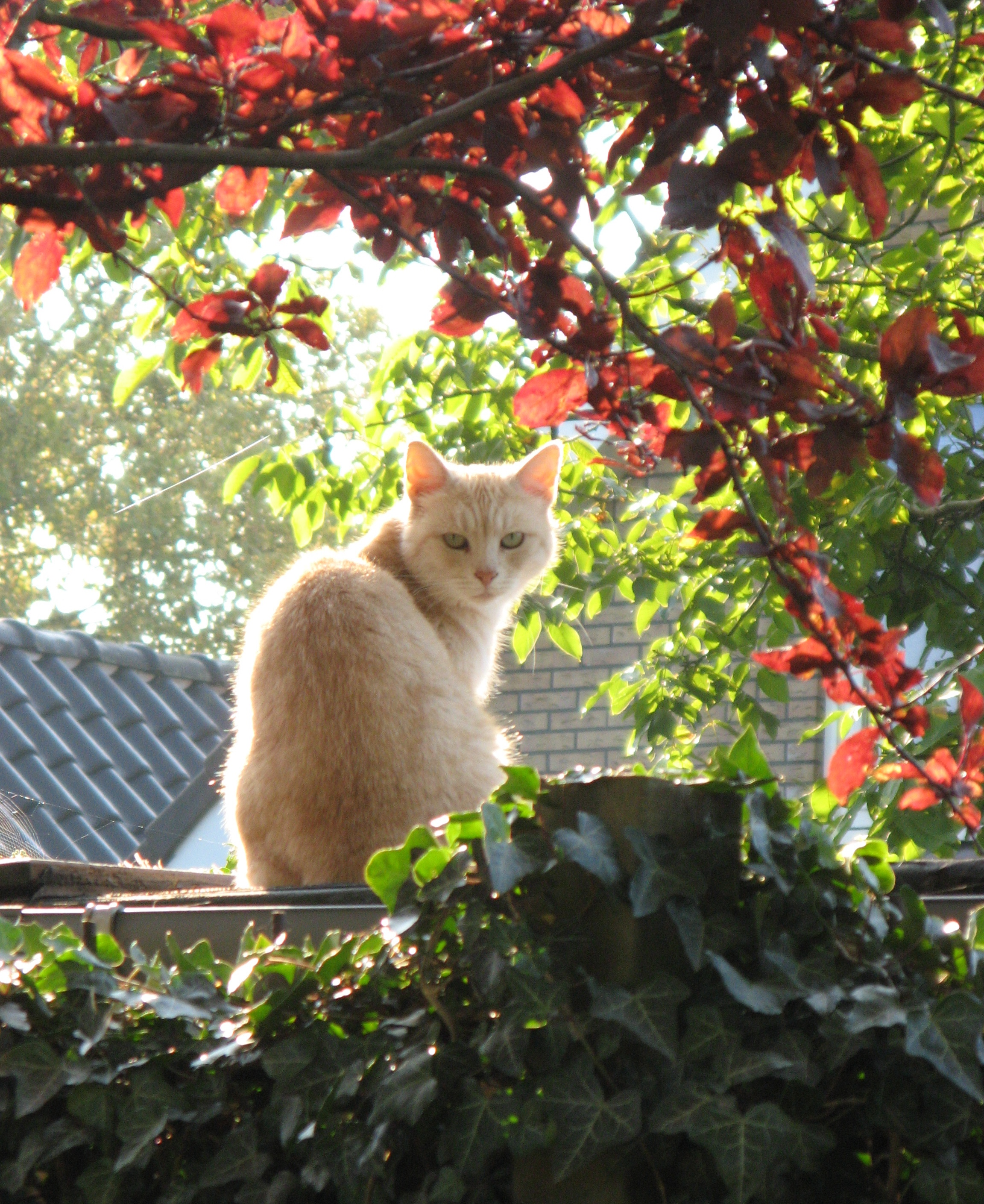 THE MAGICAL MISSING CAT….