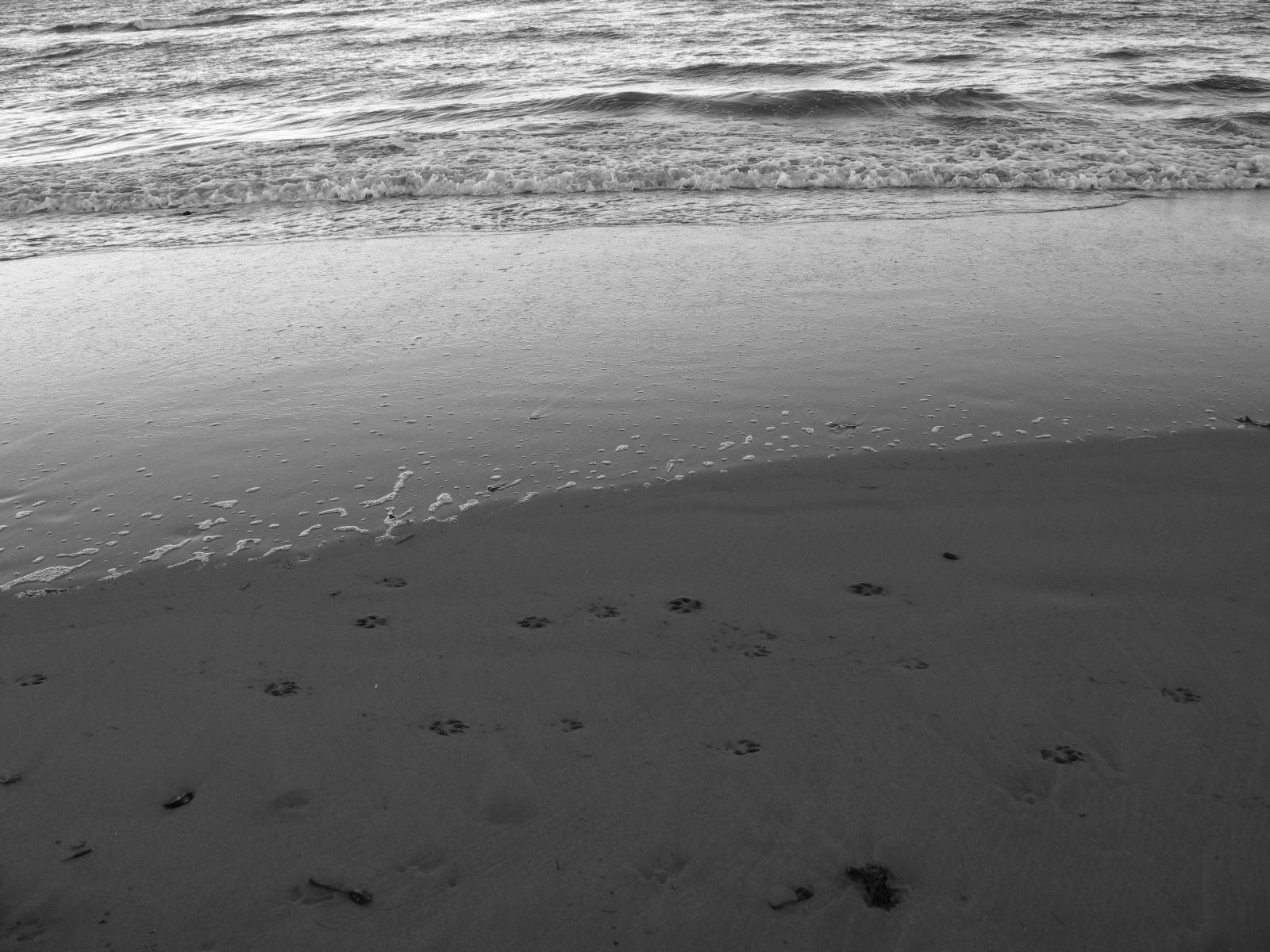 BEACH IN MACKAY, QLD, 2018