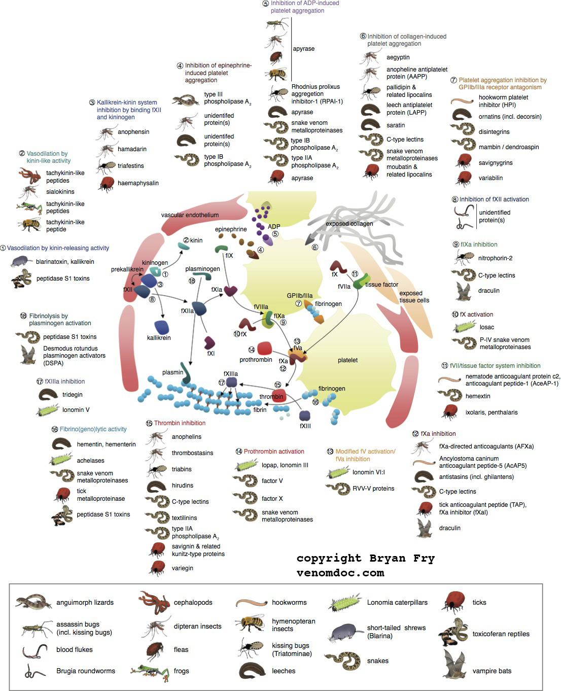 Sites of Coagulotoxin convergence,  click here to download the associated paper
