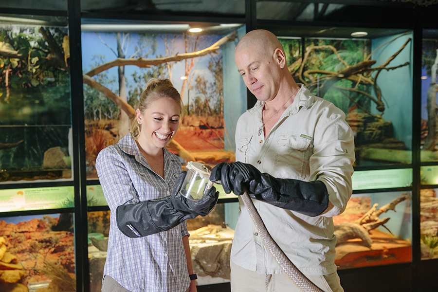 AsSOCIATE PROFESSOR BRYAN FRY AND Phd student JOrdan debono venom exracting FROM a coastal taipan ( OXYURANUS SCUTELLATUS )