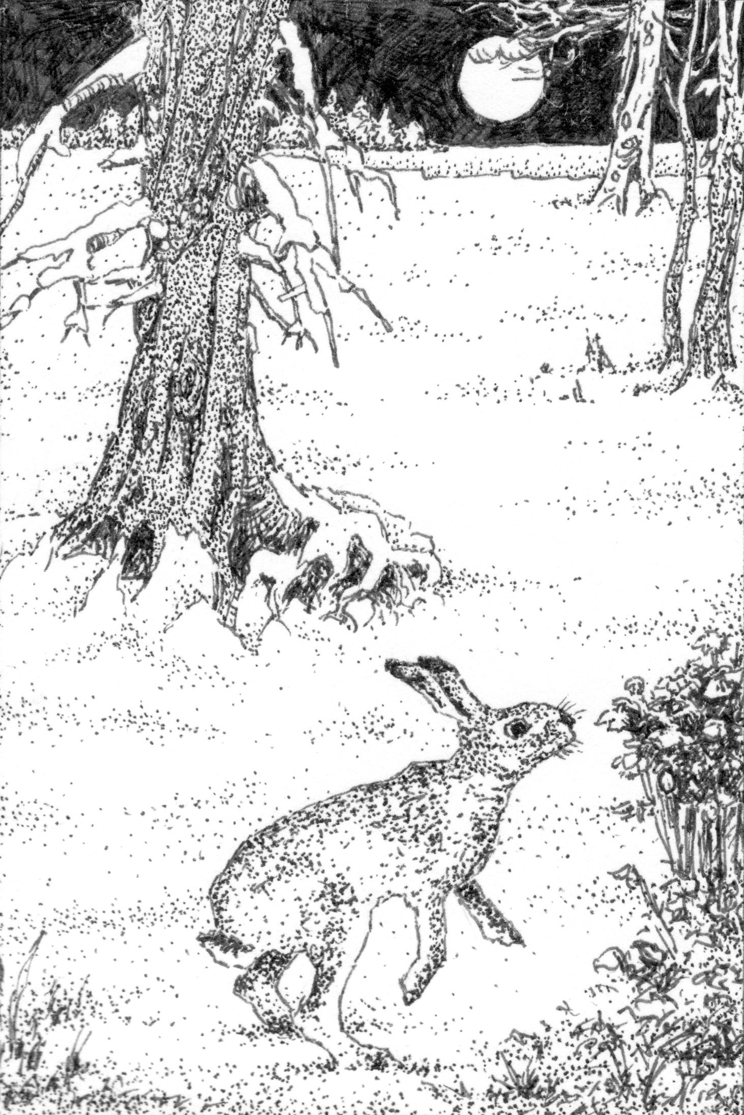 Snow Hare.jpeg