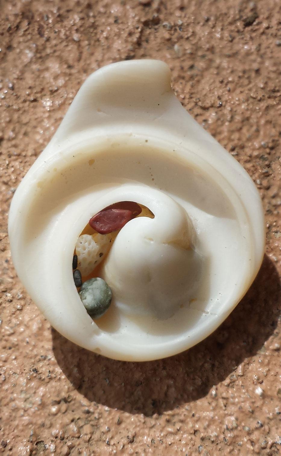Pacific ocean shell Samara Costa Rica