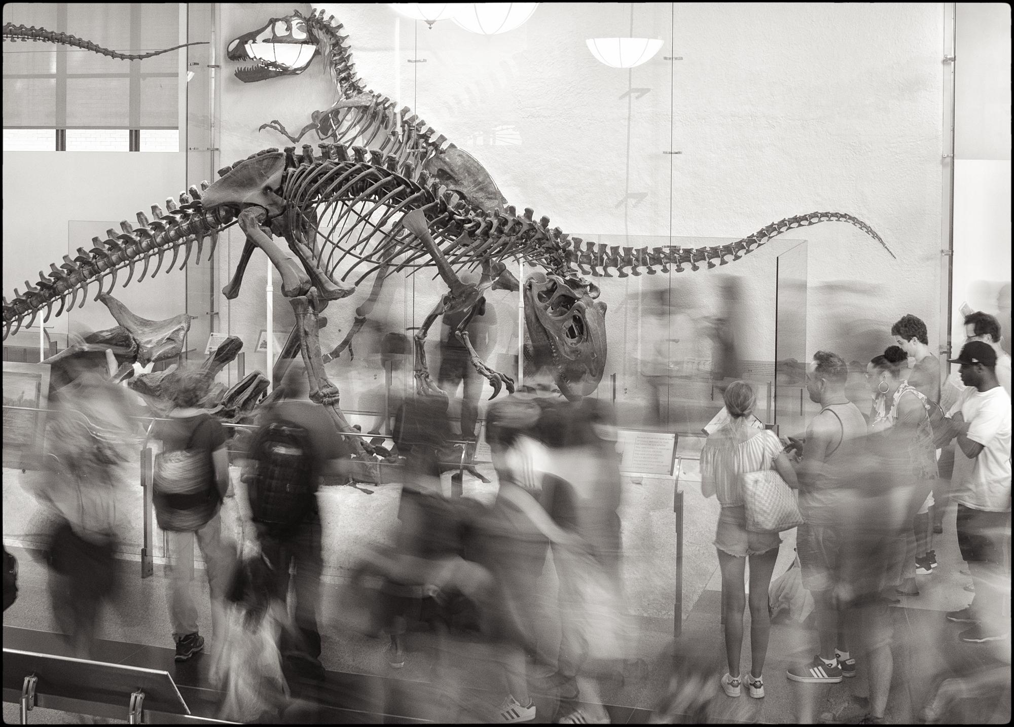dinosaurs and blur-1.jpg