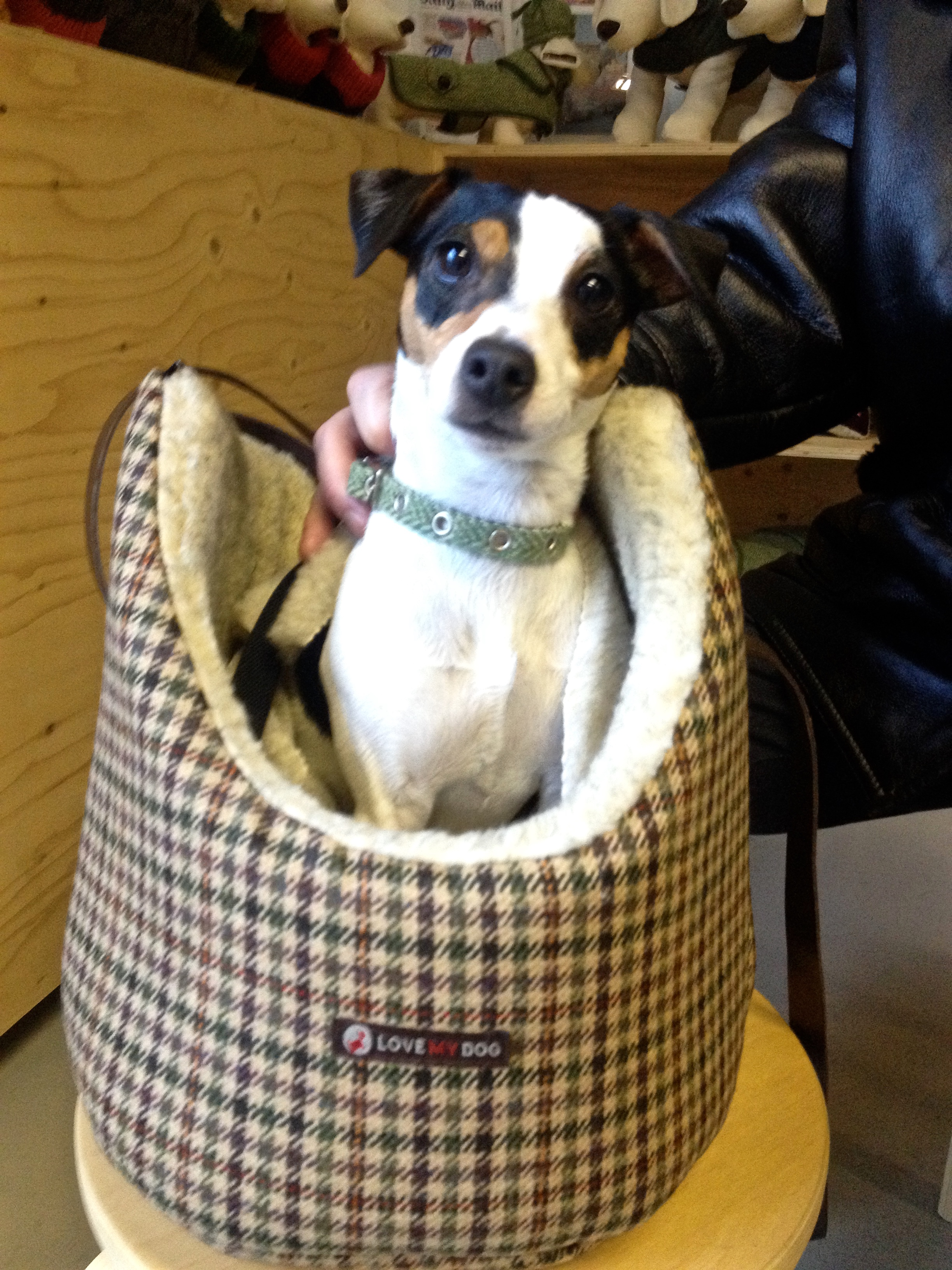 """Another time, I hurt my knee and couldn't play ball of SIX WHOLE WEEKS. It was NO FUN AT ALL.Olive Daddy had to carry me around in a special dog bag. At least the bag was very stylish. It's made of a fabric is called Oxford tweed. When Olive Mommy saw the bag she said, """"Oooh, darling!"""" Can you say, """"Oooh, darling!""""?"""