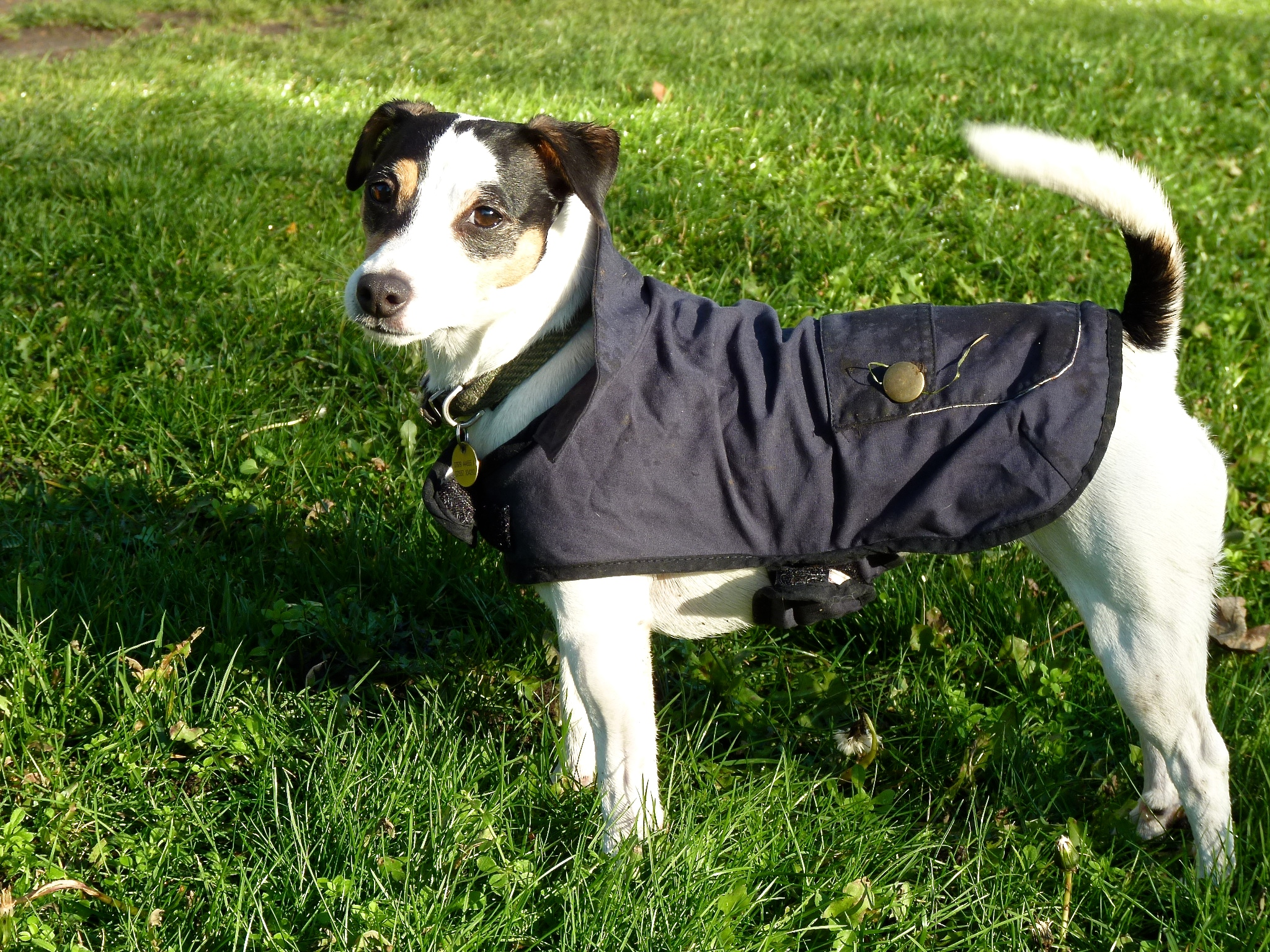 Oh no, they put me in a coat again!