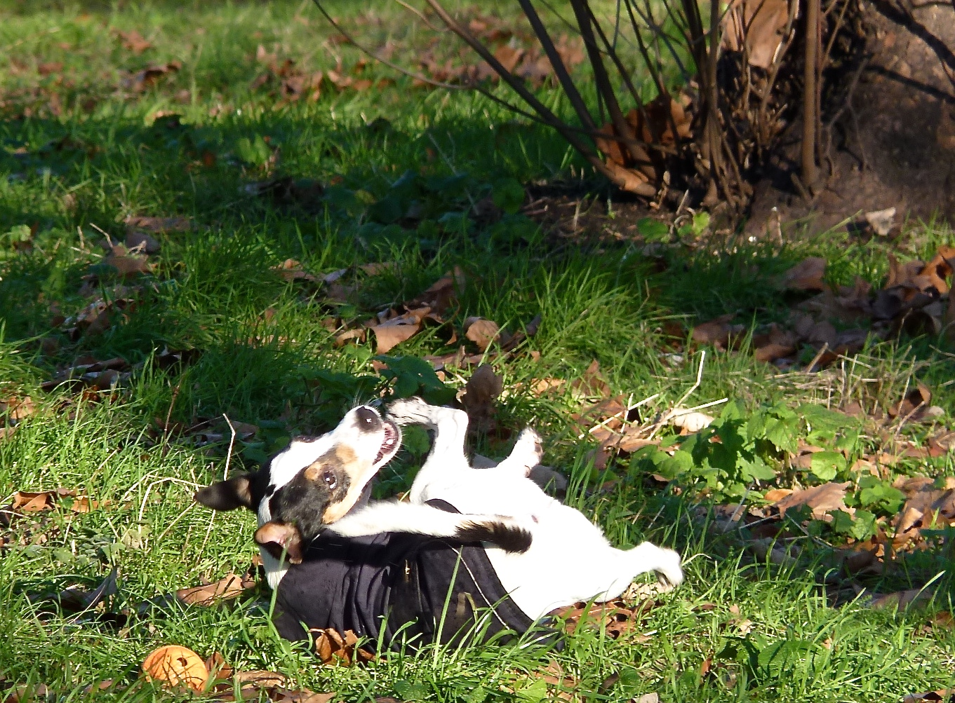 Maybe if I roll around on the ground!Get it off me! I'm already wearing a coat-- it's called fur!