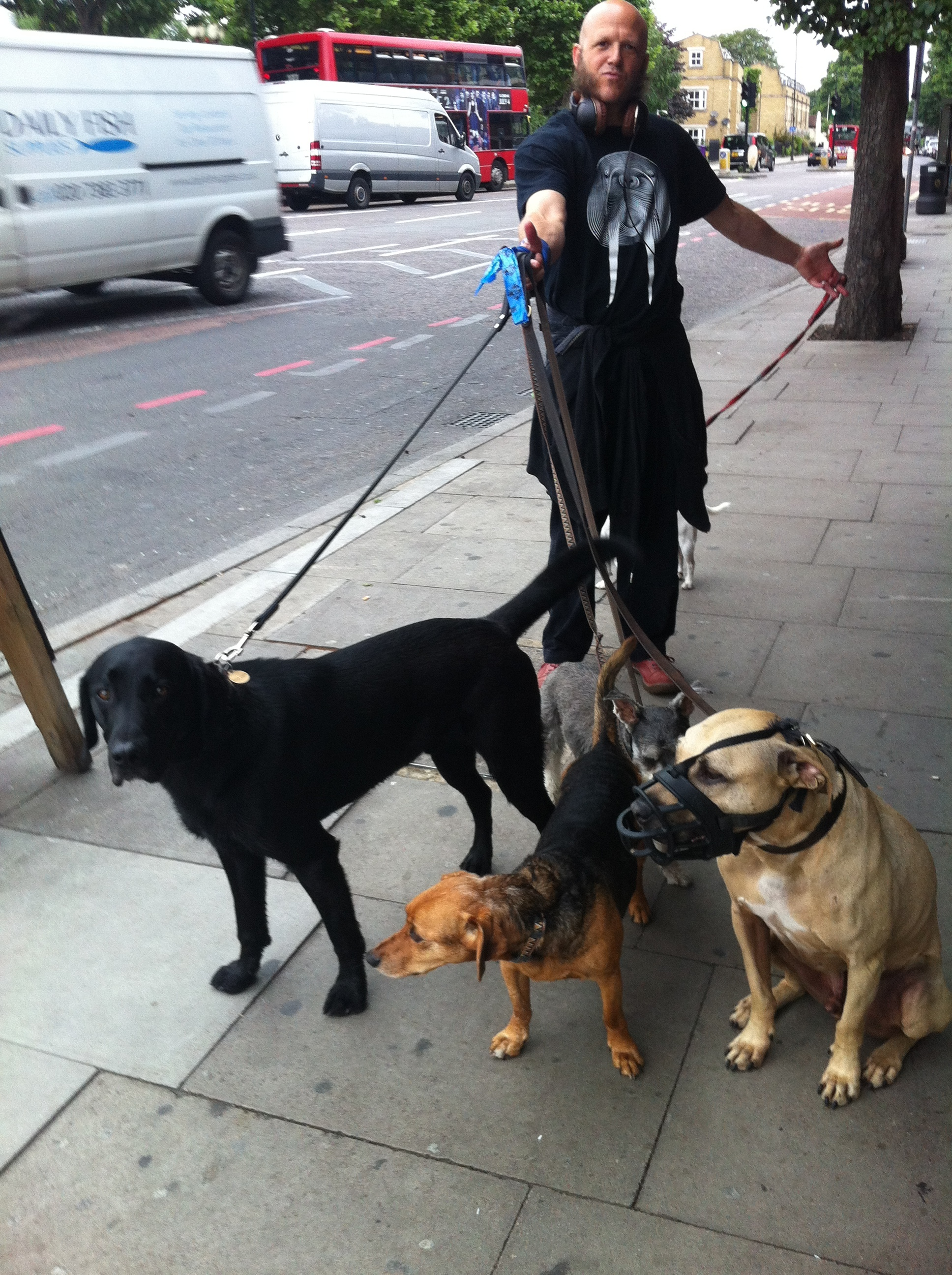 Sometimes Olive Daddy has to hold all of Kat with a K's dogs while she buys coffee. Do you think I like this? Can you find me in this picture? Have you figured out who Bulli is?