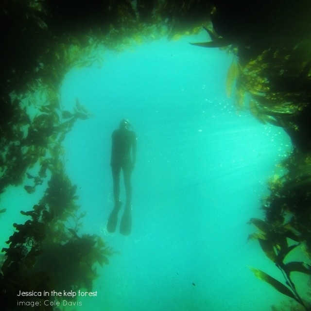 Jessica in the kelp forest
