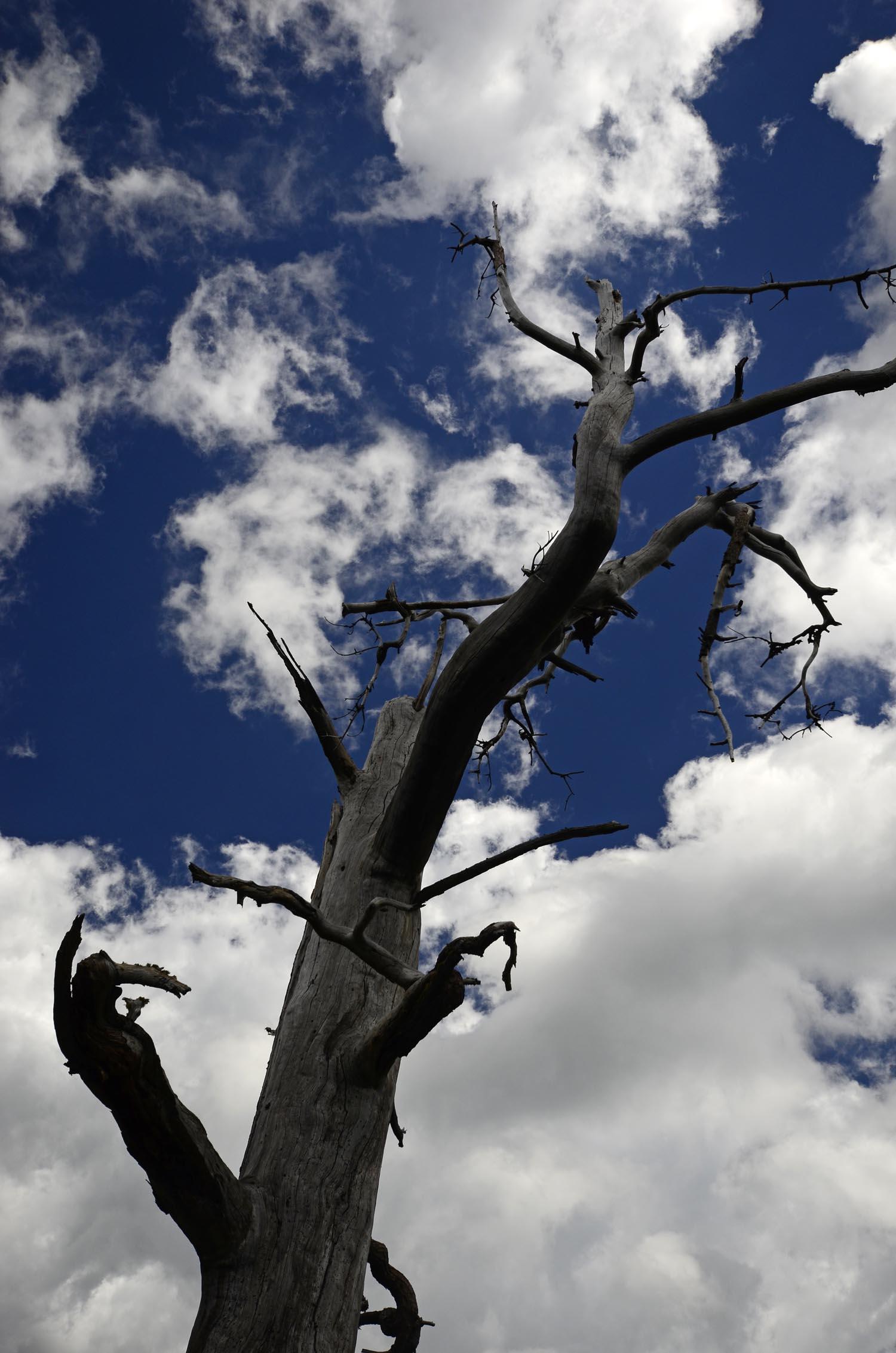 tree&sky.jpg