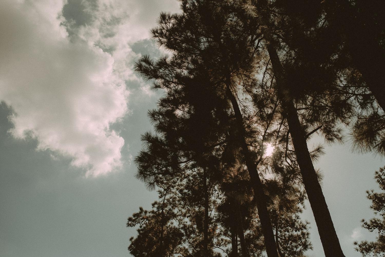 Wedding under pines