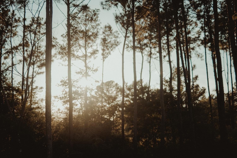 Wedding in the piney woods