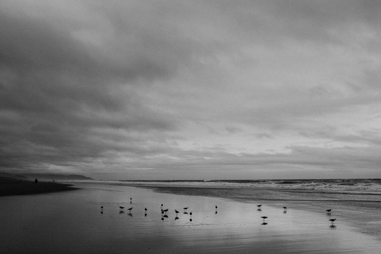 San Francisco Ocean Beach Sandpipers