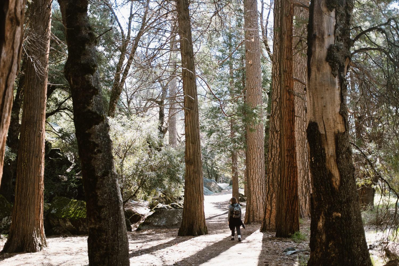 Yosemite Park Hiking