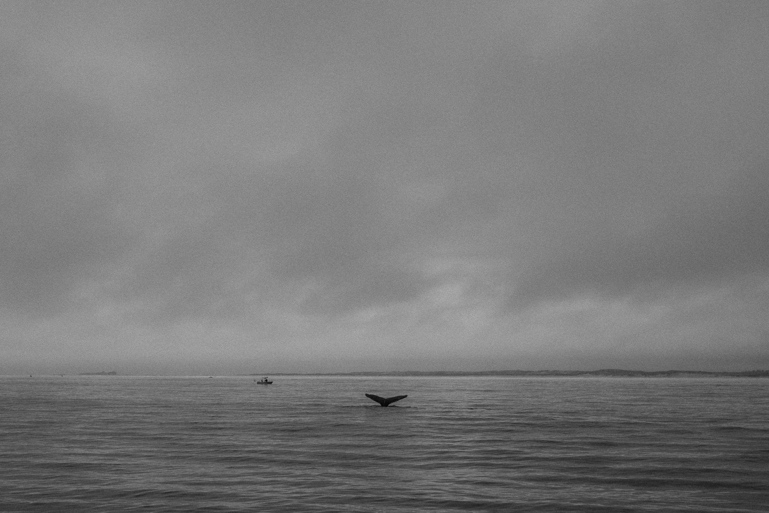 pacific ocean humpback whale