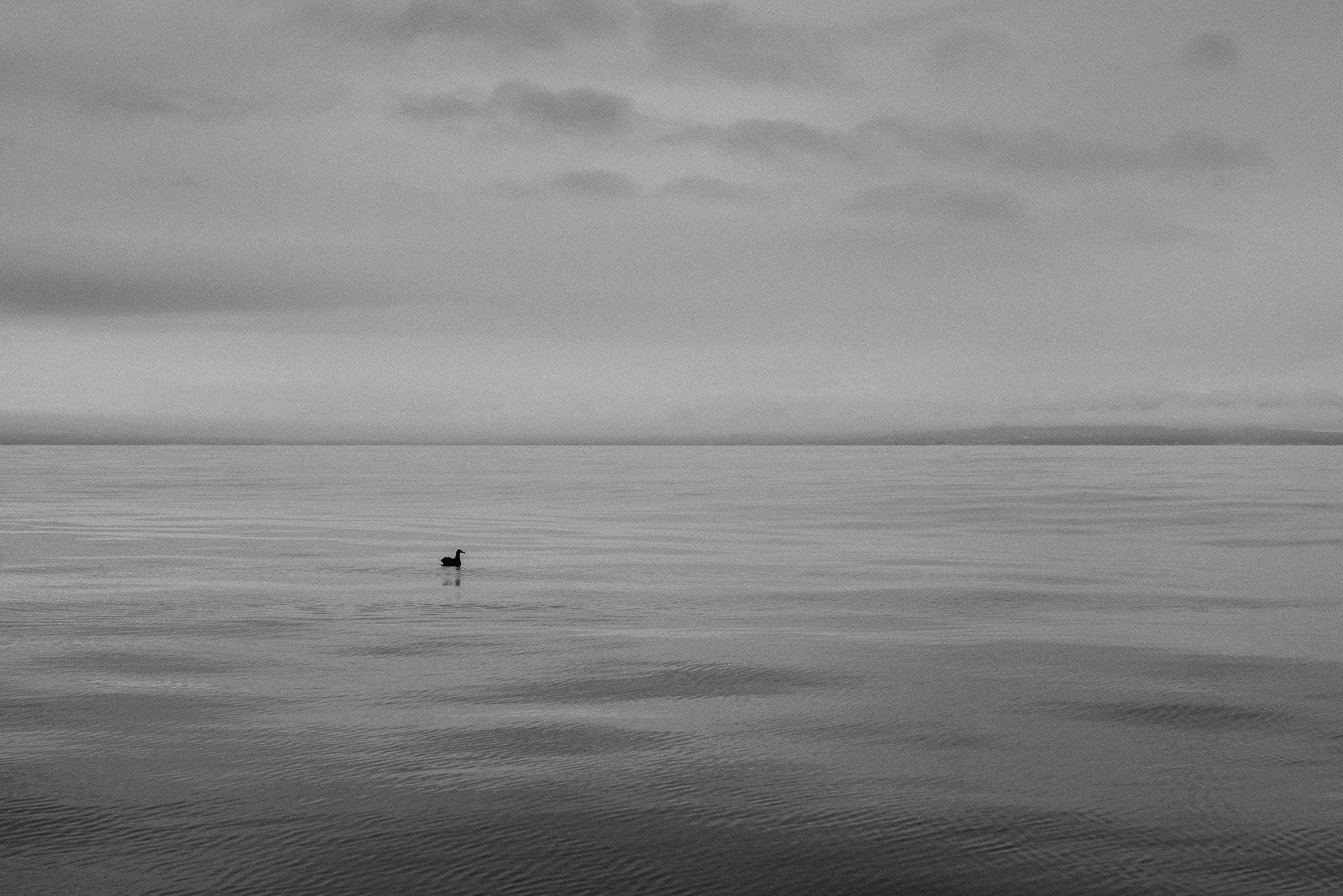 pacific ocean albatross