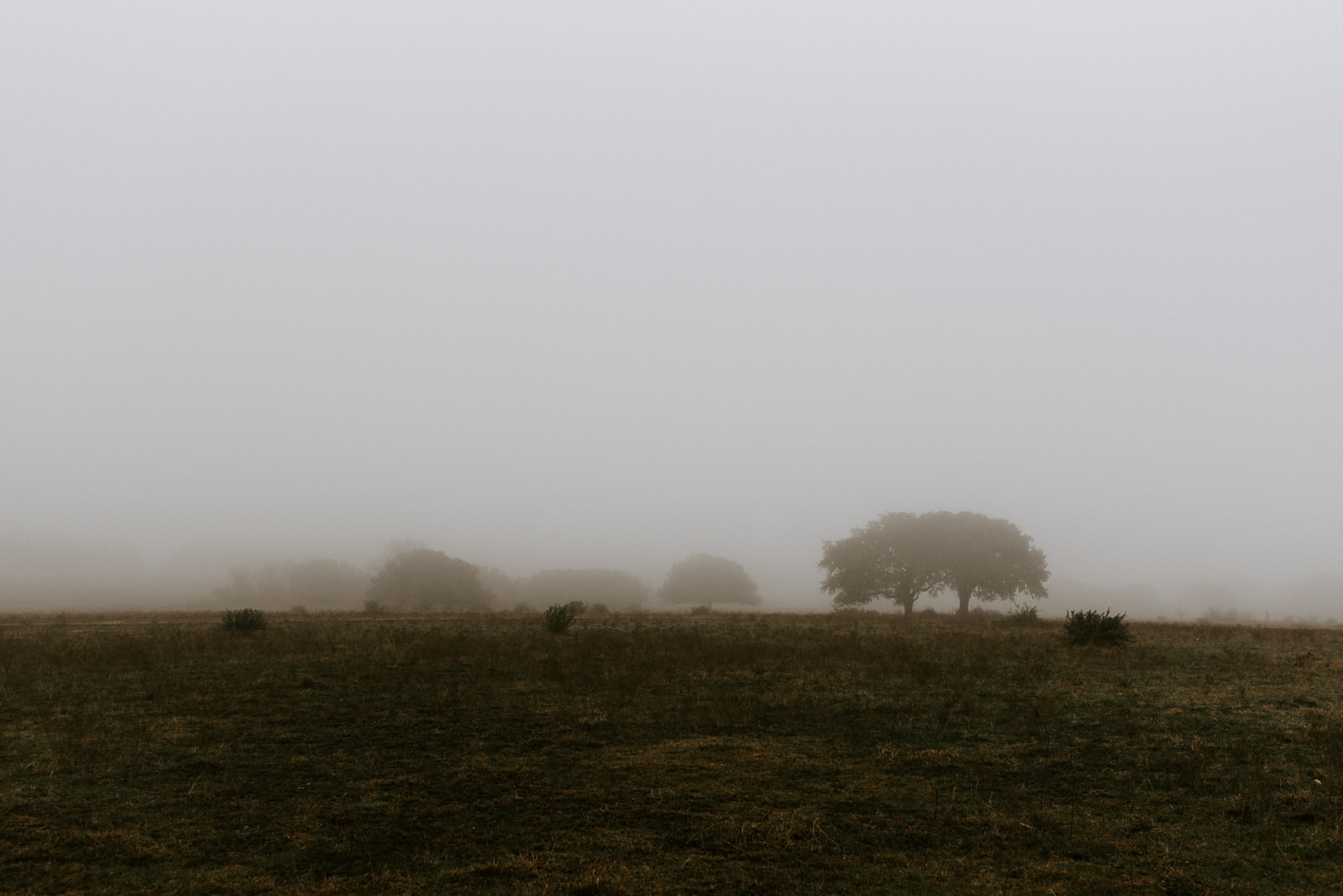 texas landscape at stonehouse villa